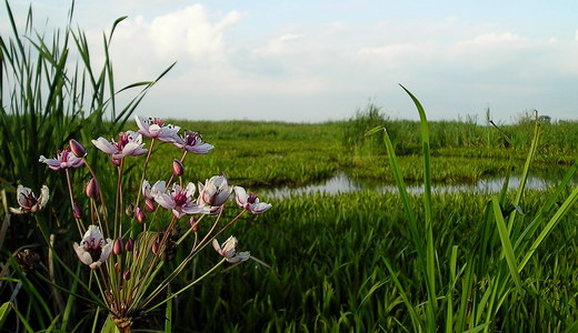 Водно-болотні угіддя Закарпатської області