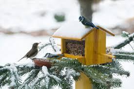Картинки зими січня